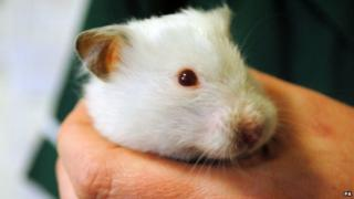 Snowball the abandoned hamster