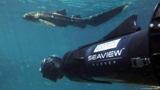 Seaview camera and shark