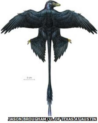 Reconstruction of Microraptor