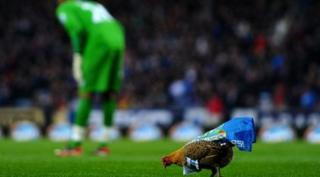 chicken on football pitch with goalkeeper behind