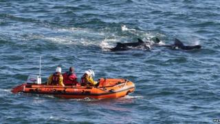 RNLI members move whales away from shore