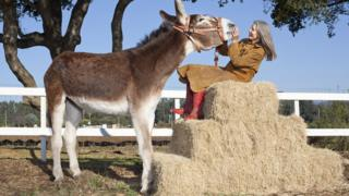 Tallest donkey in the world and his owner.