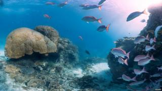 Fishes in water in the Great Barrier Reef