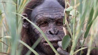 Reconstruction of early human