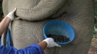 Coffee beans and back of elephant