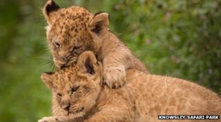 Lion cubs named Jessica Ennis and Victoria Pendleton