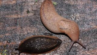 Slugs on allotment