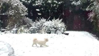A dog in a snowy garden