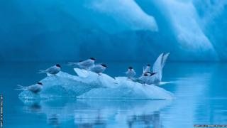 Birds resting on a floating ice island in a very cold setting