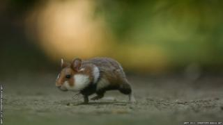 A mouse scurrying along a forest floor