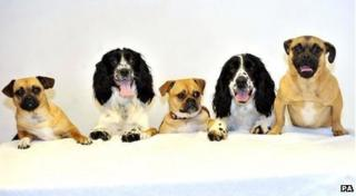 These dogs found homes after being rescued by the RSPCA.