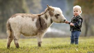 A micro miniature donkey meets a visitor