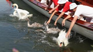 A group of people in a boat releasing swans into the water