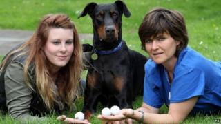 Dog with owner and vet after he surviving swallowing 3 golf balls.