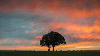 A pink and blue cloudy sky. A tree and sheep in a field below.