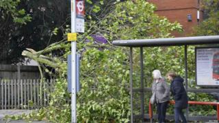 Waiting for a bus next to a fallen tree in Brentford, west London.