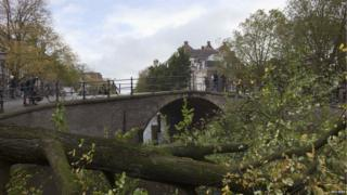 In Amsterdam, people look from a bridge at a tree which fell into the Herengracht canal.