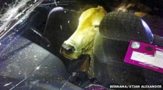 Cow found in car