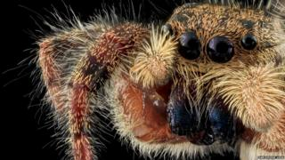 An unknown species from the Jumping Spider