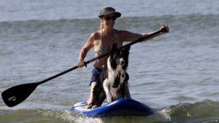 Ozzy the dog on a paddleboard
