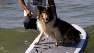 Lily the dog on a paddleboard