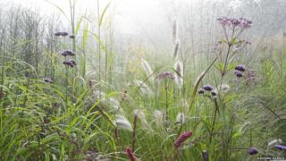 plants and grass in the mist
