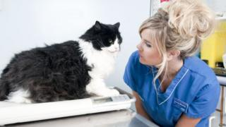 Nurse Amanda Shearsby with Lucky the cat