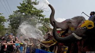 Elephants spray water
