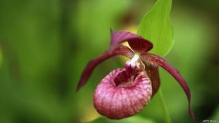 An Orchid is displayed at the 2014 Chelsea Flower Show at Royal Hospital Chelsea on May 19, 2014 in London,