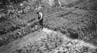 Vegetables growing in the moat at the Tower of London, as a result of the Grow More Food campaign during World War II, 7 June 1940