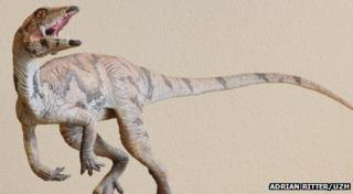 A model of the Laquintasaura venezuelae