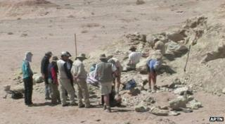 Researchers discover remains of dinosaur's skeleton in Mongolia