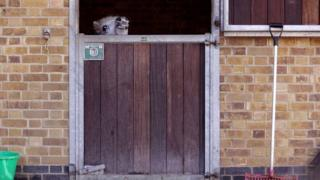 A pony struggling to see over a stable door