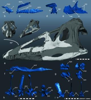 Researchers used 3D models to reconstruct the skull of the croc