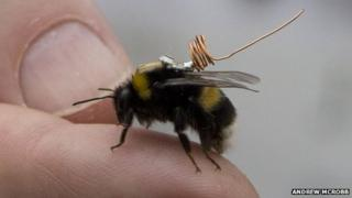 bee with tracker