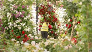 A display of roses at the Chelsea Flower Show