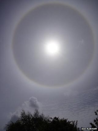 A sun halo. A tree can be seen underneath