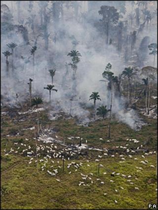 Burning trees in Brazil (Image: PA)
