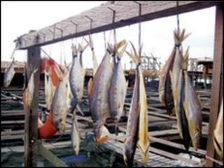 Fish hanging in Singapore