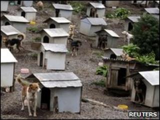 Dogs outside tin shacks in Brazil