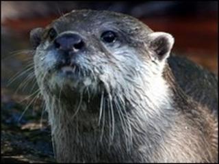 Otter [generic]