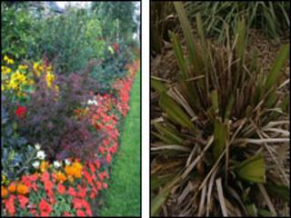 Floral displays before and after being poisoned with the weedkiller