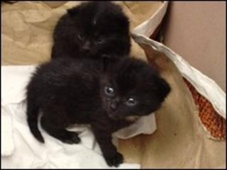 Kittens dumped by road in Shropshire