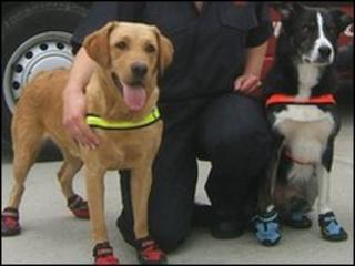 Ember and Barney the fire investigation dogs