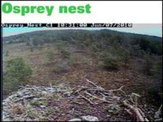 Loch Garten osprey nest blog