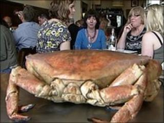 South Devon crab