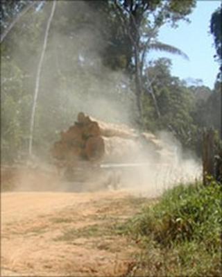 Logging lorry