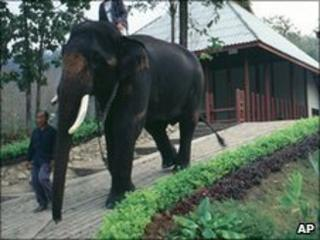 Keepers escort a white elephant in Thailand (file photo)