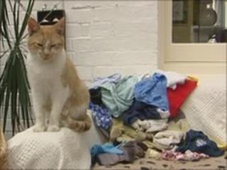Oscar with his haul of underwear
