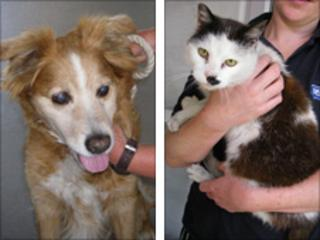 Ant the dog and Dec the cat who were found in a pub car park